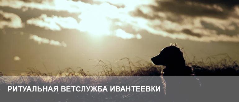 Усыпление и кремация Ивантеевка
