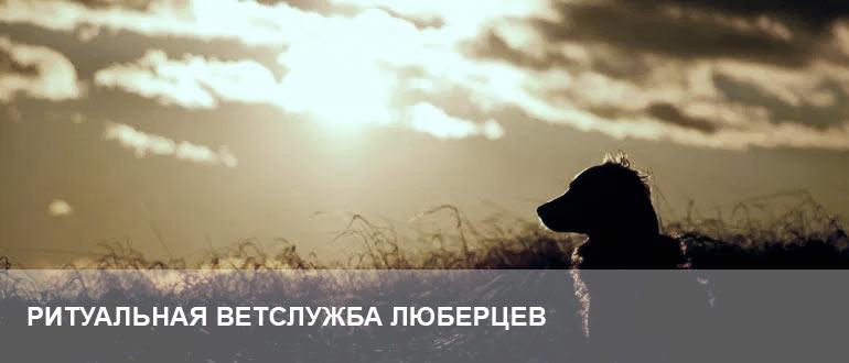 Усыпление и кремация животных в Люберцах